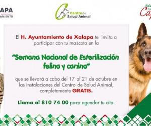 Esterilización Canina y Felina